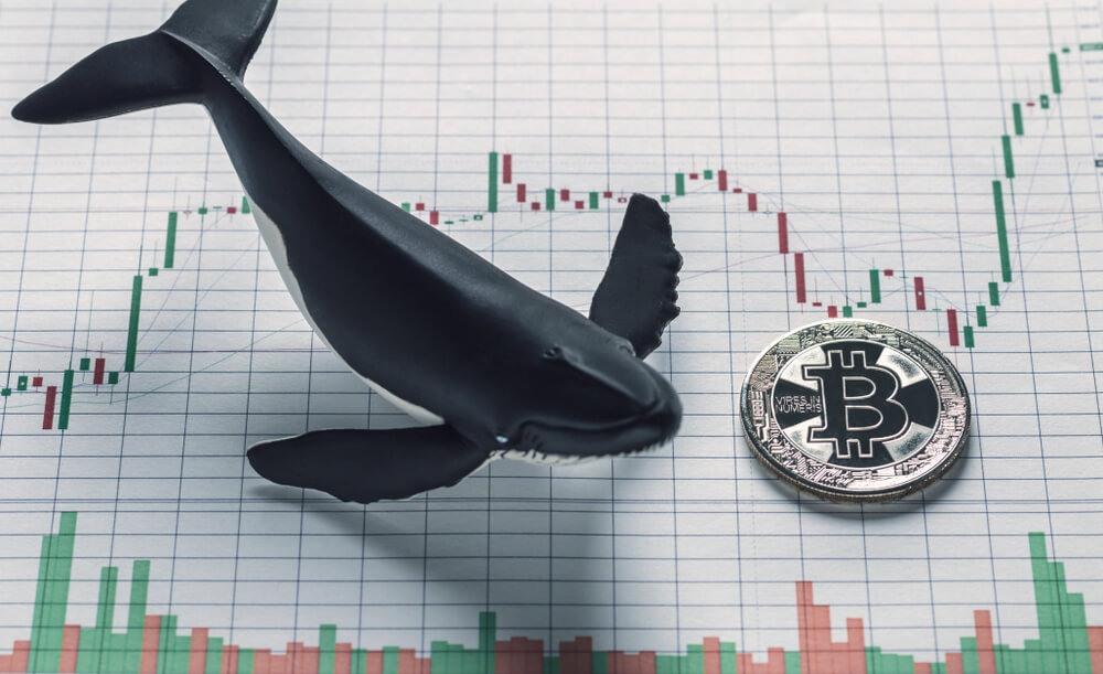 Биткоин киты повышают волатильность, — Bloomberg