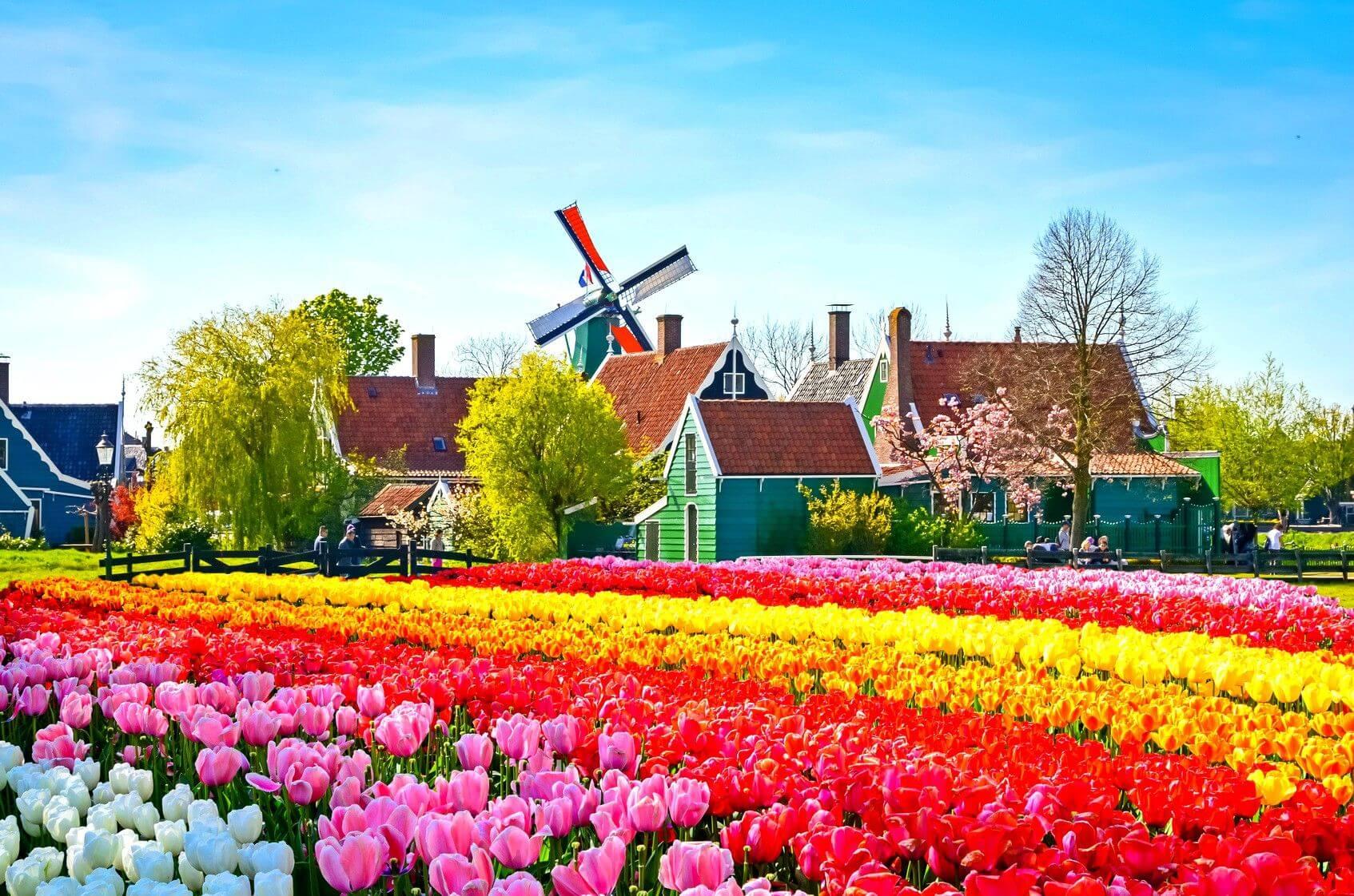 ЦБ Голландии желает тестировать цифровую валюту Европейского Союза